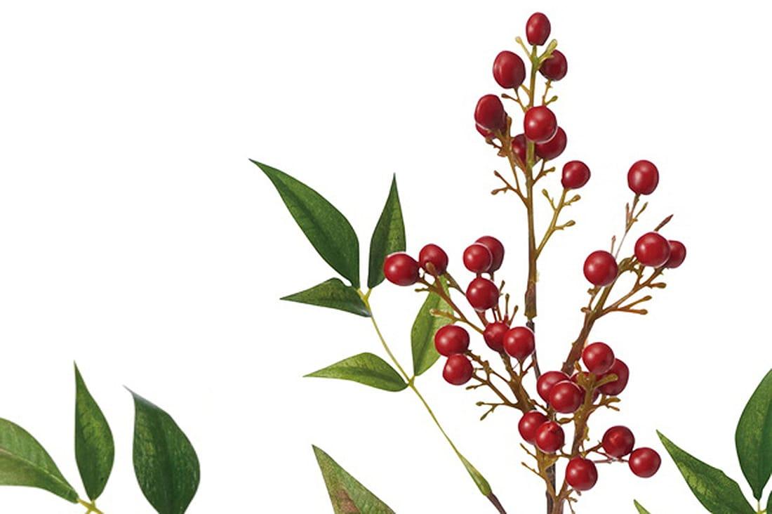 赤い実の「ナンテン」