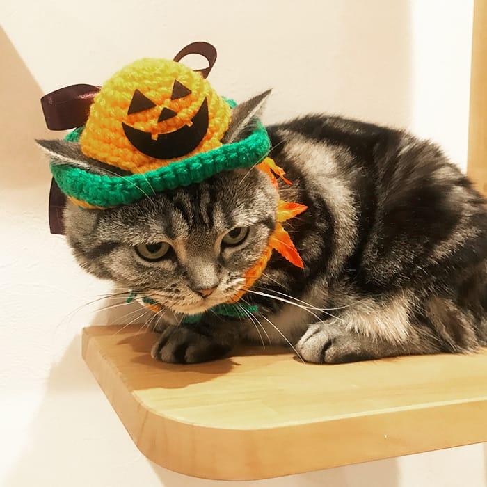 かぼちゃの帽子