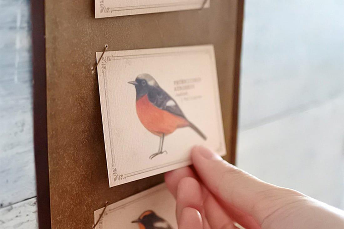 mocolierさんの野鳥のメッセージカード