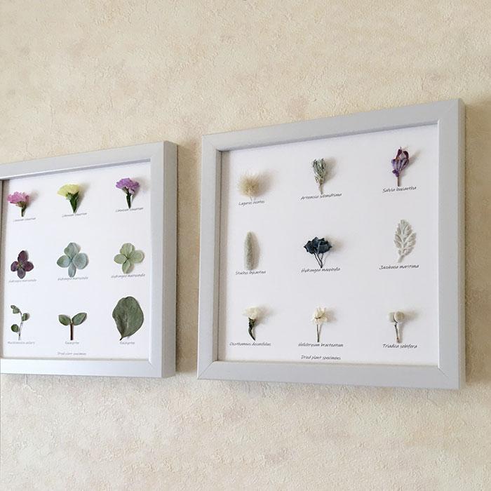 オノマトぺ.フさんの植物標本パネル