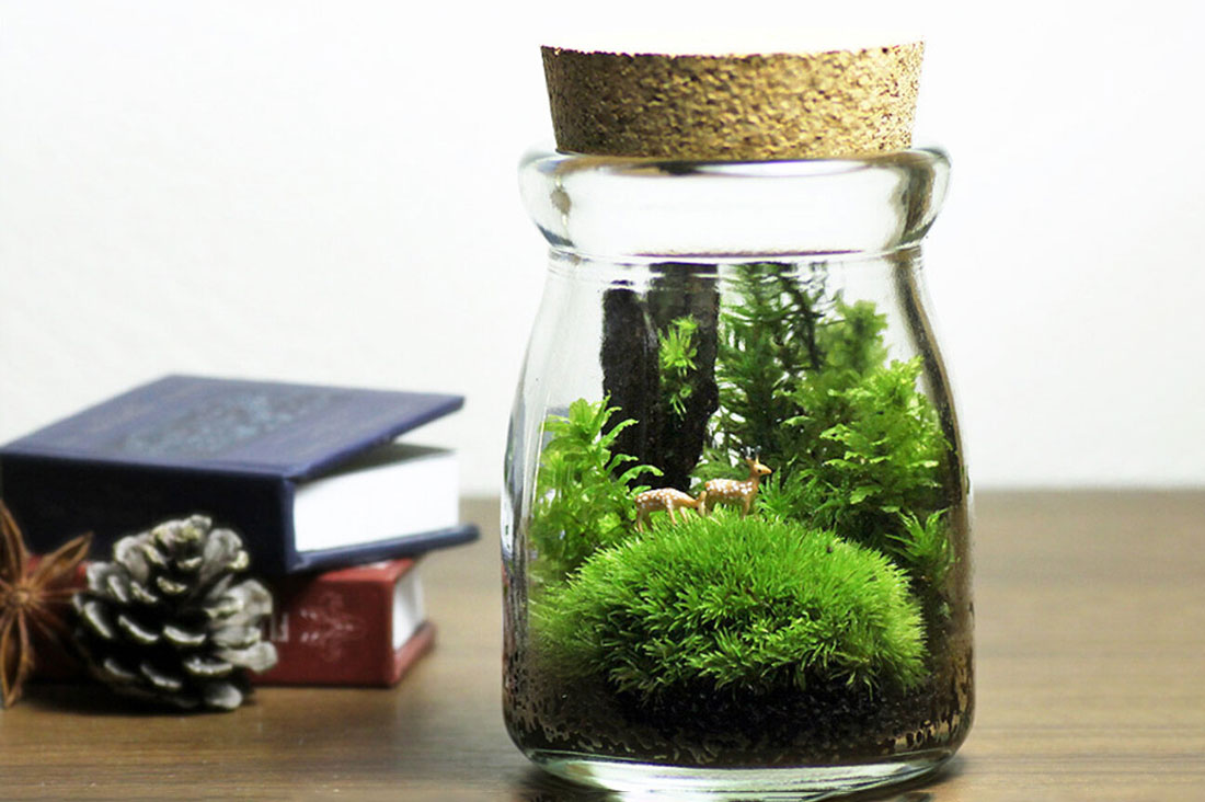 mofumofu-mossさんの苔の箱庭テラリウム