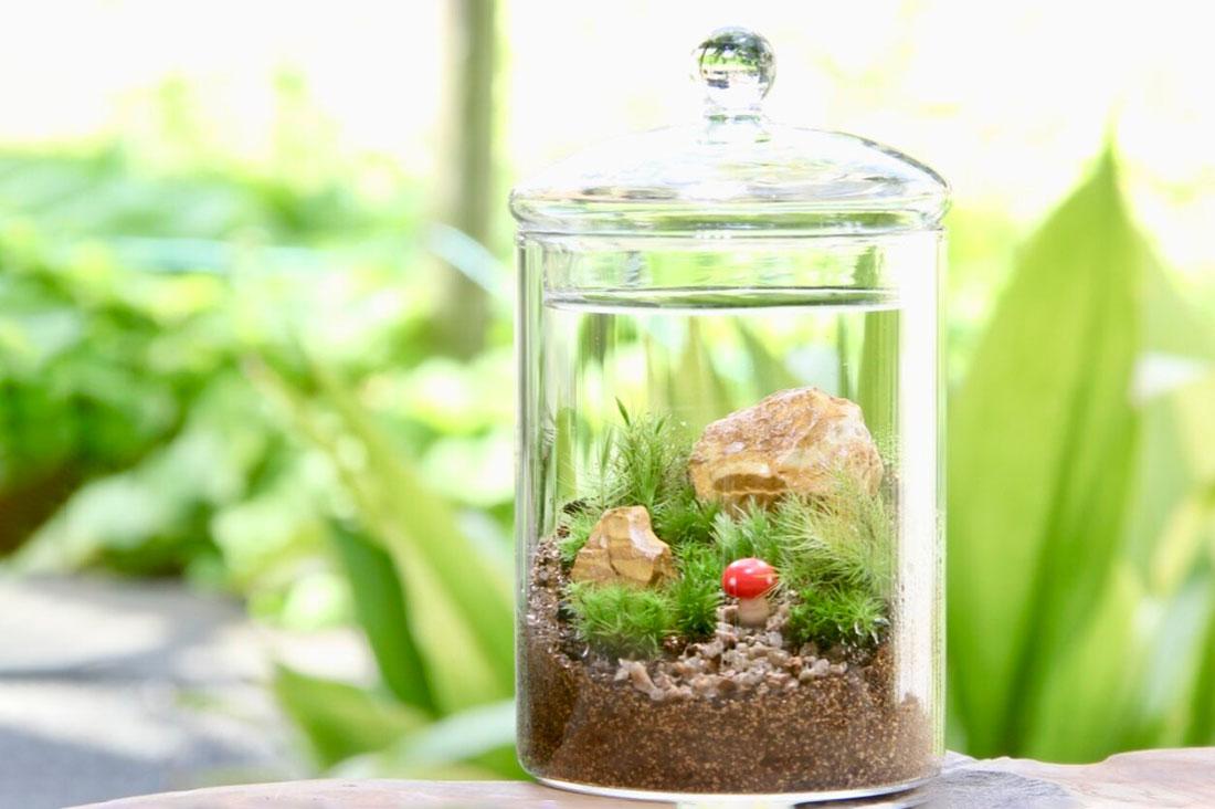 苔むすびさんの苔テラリウム制作キット