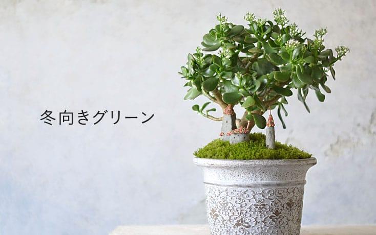 冬向きグリーン