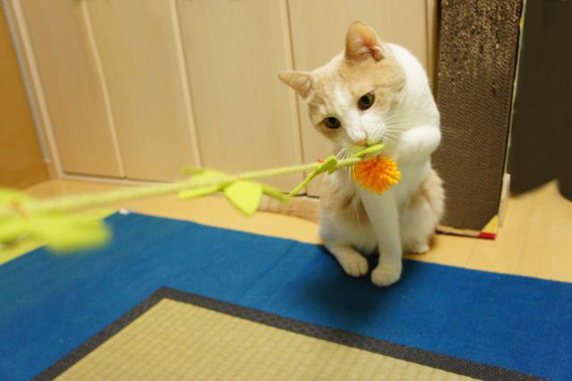 毛皮を使わない猫おもちゃ(毛糸とフエルト)