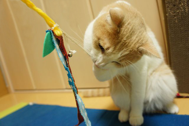 毛皮を使わない猫おもちゃ(リボン)