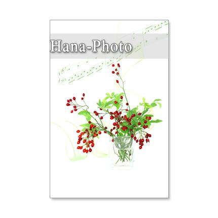 1002)セット 5枚選べるポストカード  「ローズヒップ 1002」