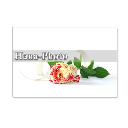 1008 セット 5枚選べるポストカード  「深紅のバラとバイカラーのバラのカード 1008」