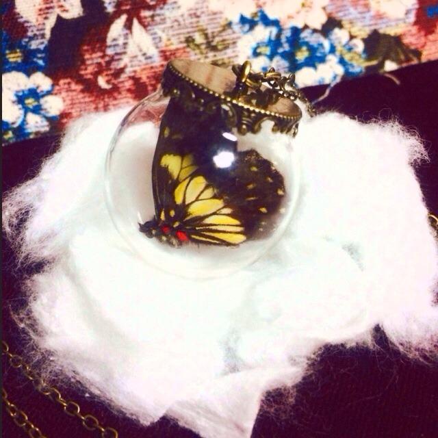 蝶々標本ネックレス