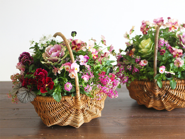 ふわもこアリッサムとビオラのギャザリング-季節の花の寄せ植え-