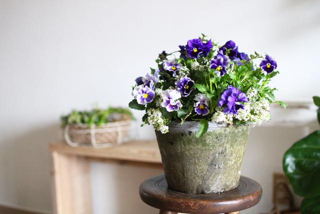 ふりふりパンジーのギャザリング-季節の花の寄せ植え-