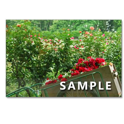 1018)セット 5枚選べるポストカード 「華やかなバラたち 1018」