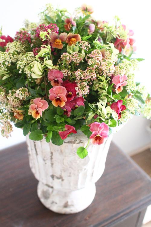 アンテイークカラーのビオラとアリッサムのギャザリング-季節の花の寄せ植え-