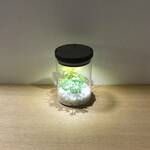 bottle terrarium mini [cool]