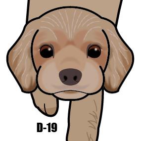 D-19 ����ꥫ���å��������ѥ˥���-���ο��һ���
