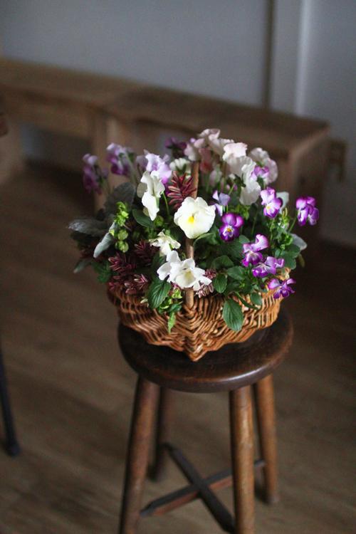 """パンジー""""モモカ""""のギャザリング-季節の花の寄せ植え-"""