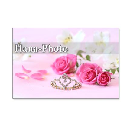 1028)セット 5枚選べるポストカード  「美しい赤のバラとピンクのバラ」