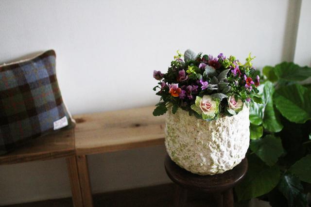 パープルビオラのギャザリング-季節の花の寄せ植え-