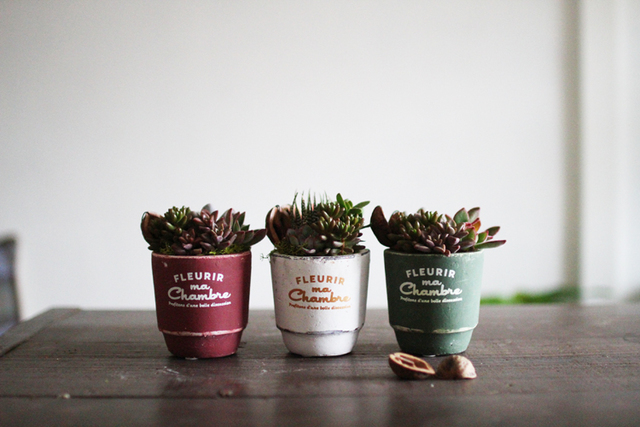 fleurirポット多肉植物寄せ植え