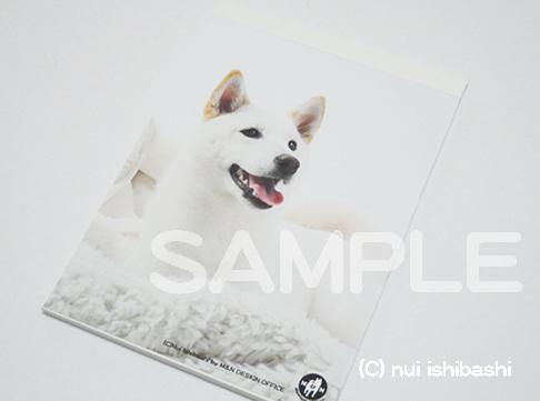 白柴のメモ帳(写真)
