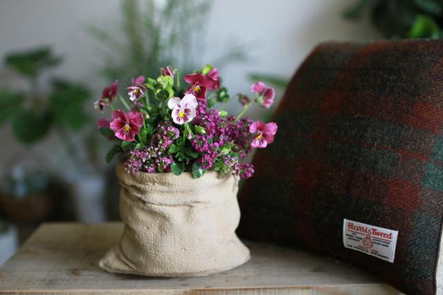 色変わりビオラのギャザリング-季節の花の寄せ植え-