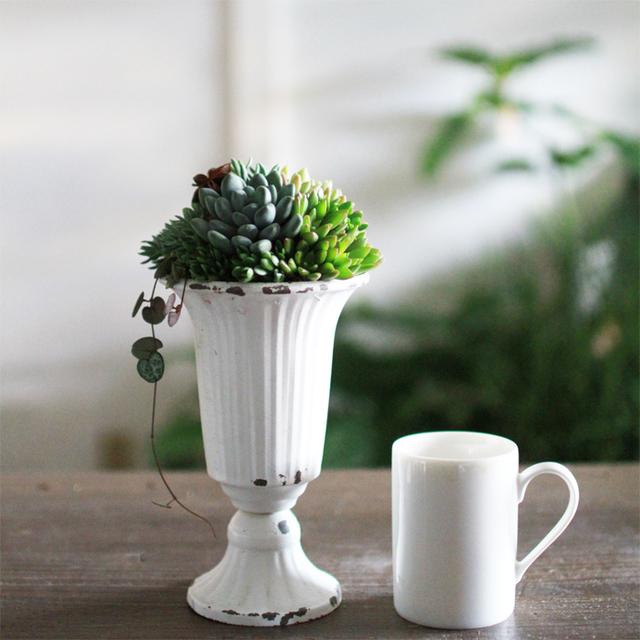 【1点もの】アンティークカップの多肉植物寄せ植え