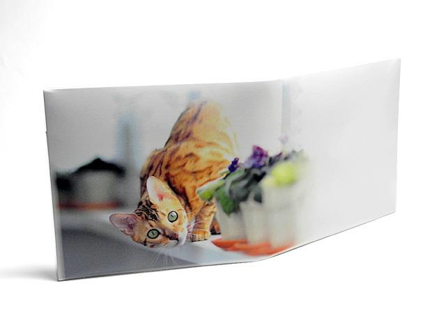 ★NEW★【送料¥90】 ストーンペーパーウォレット【興味津々な猫】