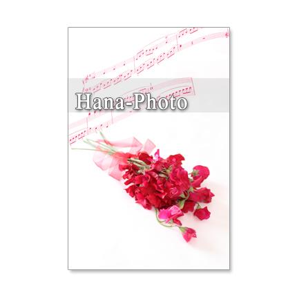 1044)「赤いスイトピー」   セット 5枚選べるポストカード
