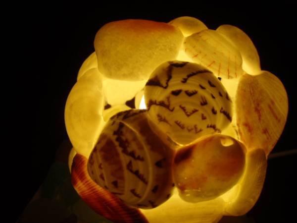 貝殻のランプシェイドT