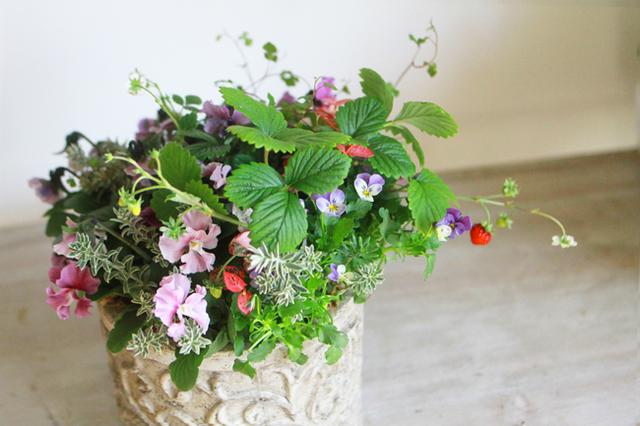 【1点もの】ぞうさんビオラのギャザリング-季節の花の寄せ植え-
