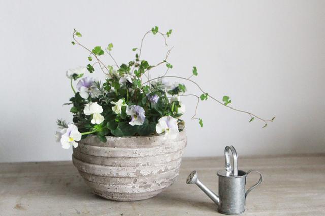 ぞうさんビオラとスペードの葉のギャザリング-季節の花の寄せ植え-