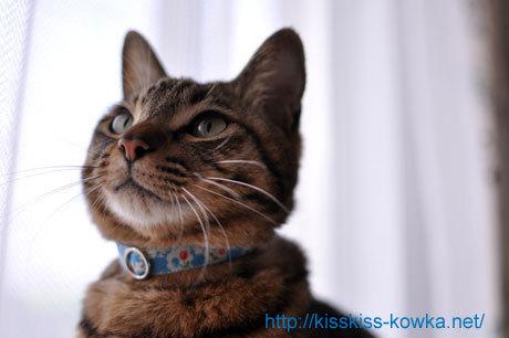 猫用首輪【ブルーチェリー】
