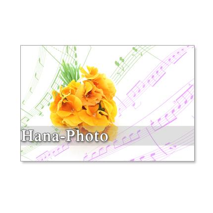 1048)「オレンジ色のパンジー 2」 セット 5枚選べるポストカード