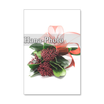 1050)可愛いスキミアの花 セット 5枚選べるポストカード