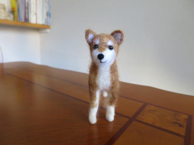 しぃの柴犬