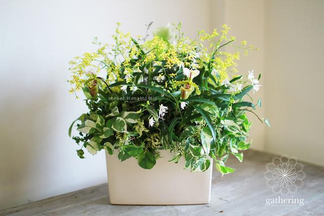 【1点もの】パフィオとオンシジューム洋蘭ギャザリング-季節の花の寄せ植え-