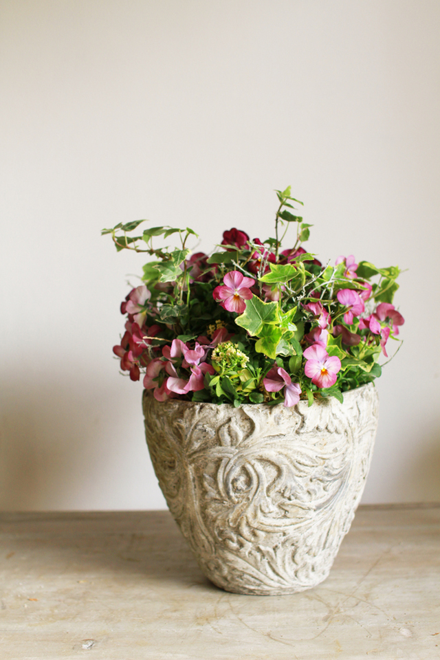【1点もの】ビオラとアイビーギャザリング-花の寄せ植え-