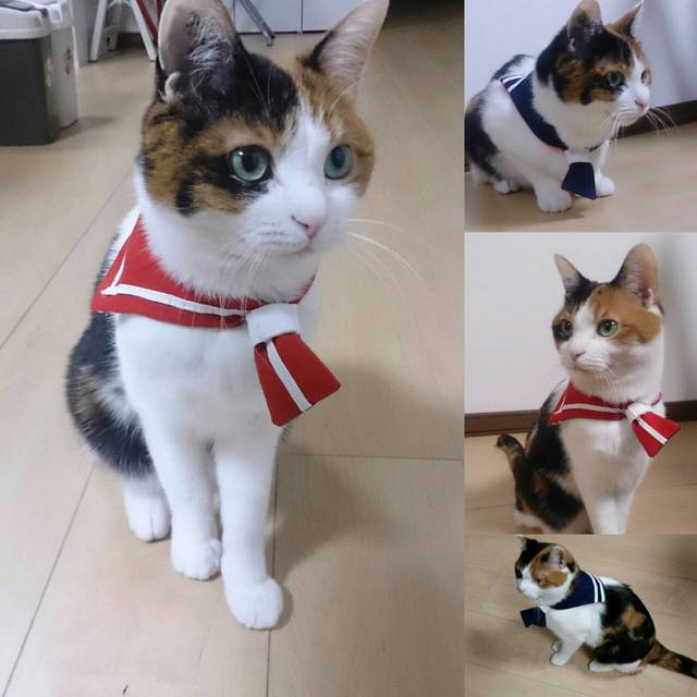 【猫・小型犬用】赤×紺セーラーカラー...