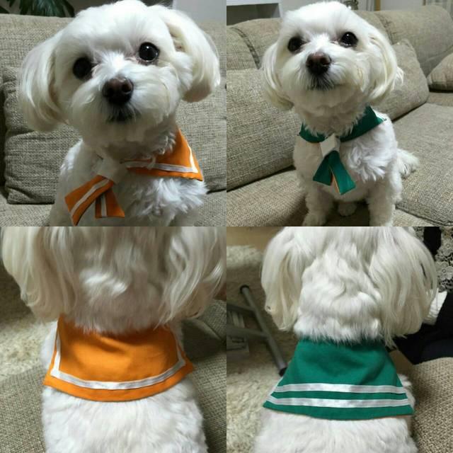 【猫・小型犬用】緑×オレンジセーラーカラーでおしゃれに変身!
