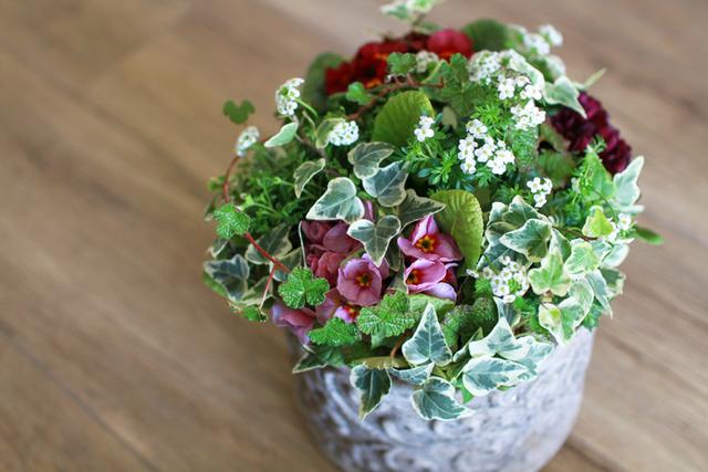 【1点もの】アンティークジュリアンとフッチンシアのギャザリング-花と植物寄せ植え-