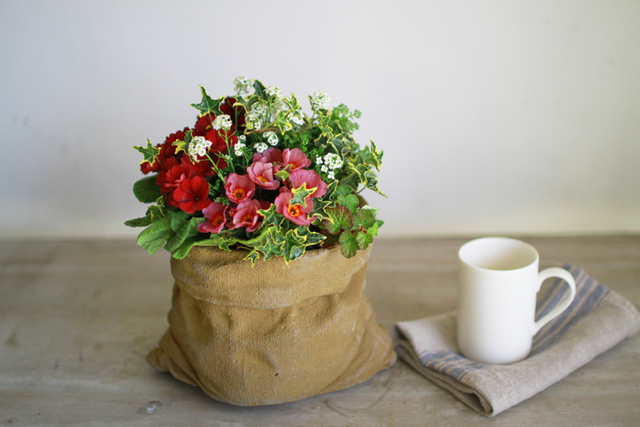 【1点もの】アンティークジュリアンとフッチンシアのギャザリング2-花と植物寄せ植え-