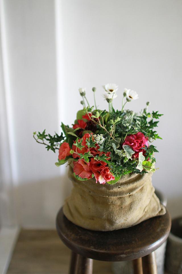【1点もの】アンティークジュリアンとローダンセマムのギャザリング2-花と植物寄せ植え-