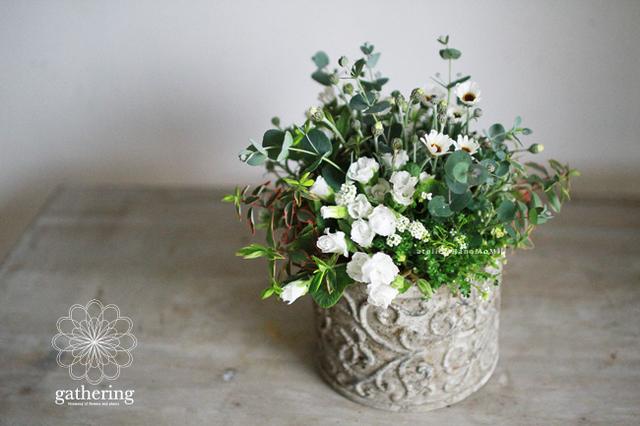 【1点もの】ローダンセマムとユーカリギャザリング-花と植物寄せ植え-