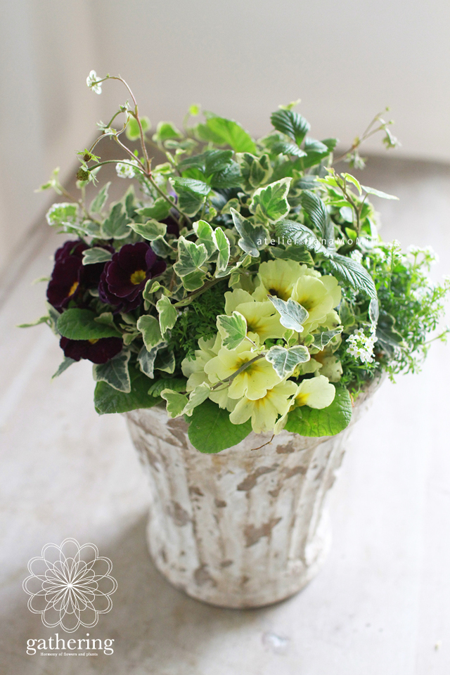 【1点もの】ジュリアンとアイビーのギャザリング-花と植物寄せ植え-