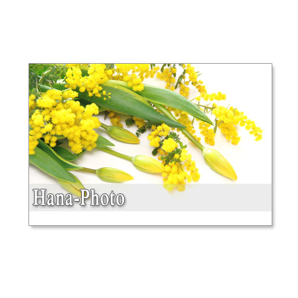 1066)春はミモザ-1  セット 5枚選べるポストカード