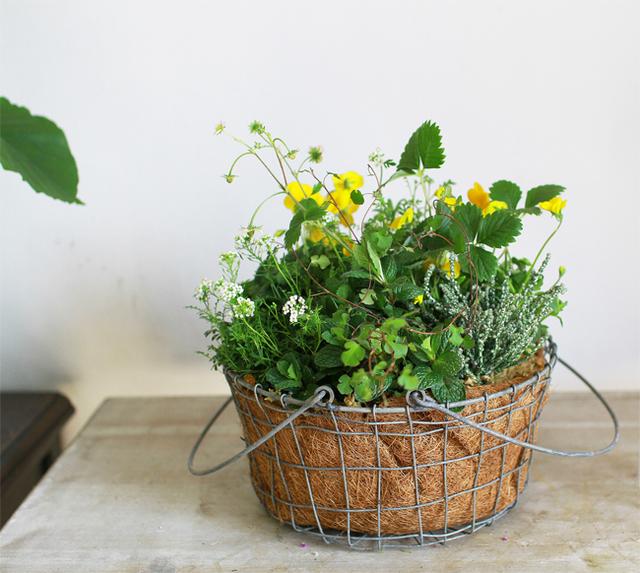 ミントの香るハーブ寄せ植えギャザリング