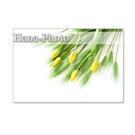 1072)花麦とチューリップ 黄色の春   ポストカード5枚セット