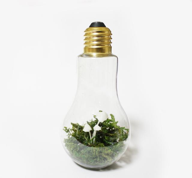 光るキノコ【ヤコウタケ】-電球ボトルタ...