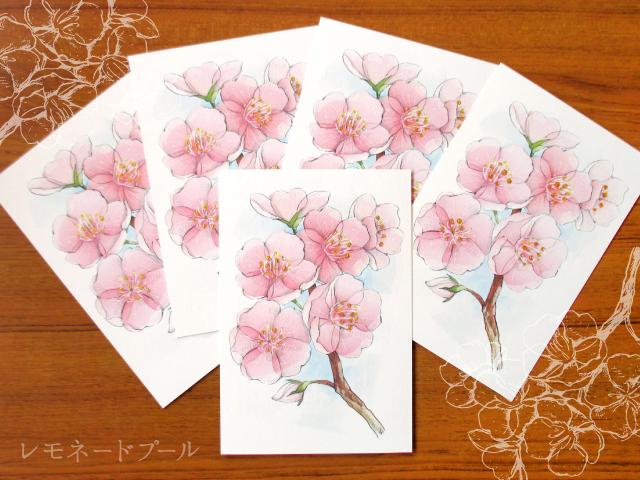 桜ポストカード★5枚セット