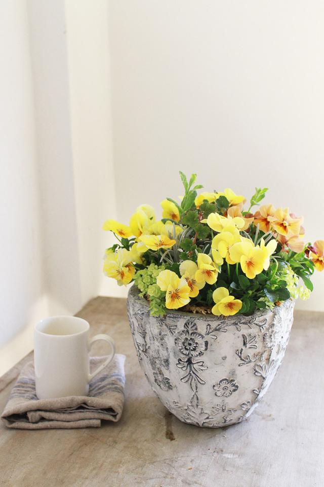 黄色いビオラのギャザリング寄せ植え