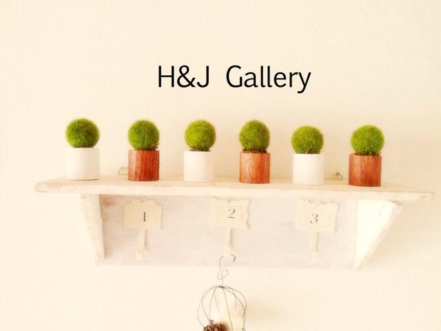 ☆小さな植木鉢*藻 白丸